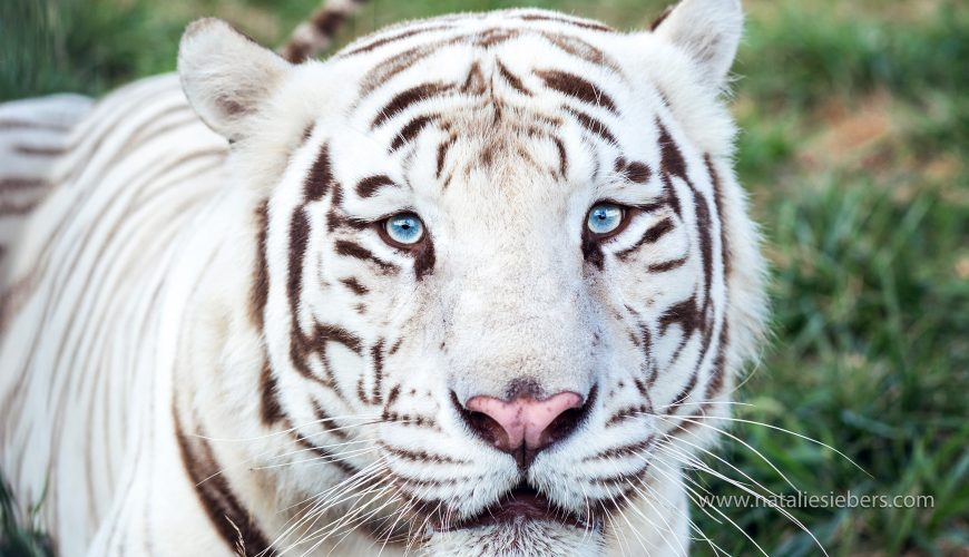 National Tiger Sanctuary Discount Tickets